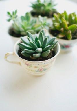 succulent_planters